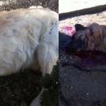 Uccide Whoopy e Maya i cani del vicino a colpi di fucile. In rete parte la petizione