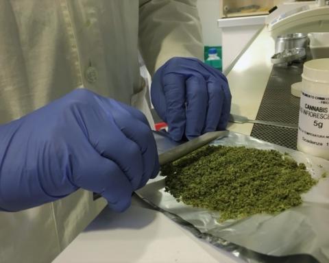 cannabis Sicilia