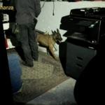 Armi, droga e videoslot illegali in un bar. Le scorperta delle Fiamme Gialle | VIDEO